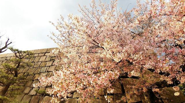 大阪旅行隨手記01|意外的櫻花、沒洗頭的日子、還有就算再強也要隨時警惕自己的武士